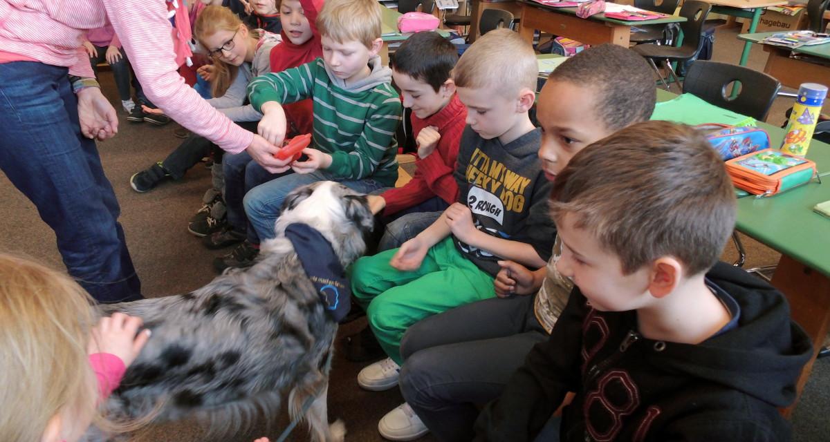 Grundschule Scheeßel - Besuch von der Helferhündin Nelly