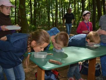 Grundschule Scheeßel - Waldjugendspiele
